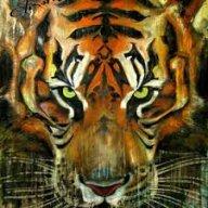 TigerBoioYT