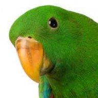 Kiwi_The_Parrot