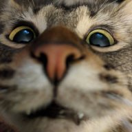 CattyCactus